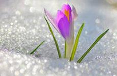 Готовимся к весне! Используем аюрведические секреты красоты.