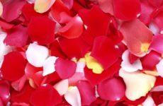 Аюрведические рецепты: рецепт розового масла и его применение