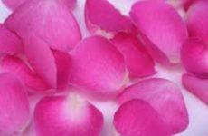 Аюрведические рецепты: рецепт розовой воды и ее использование